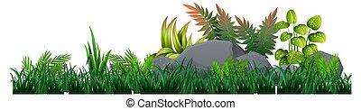 Isolated plant on white background