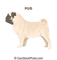 Isolated pug dog.