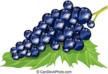 Isolated purple grapes.