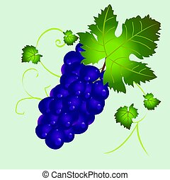 Isolated purple grapes