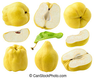 Isolated quince collection - Isolated quince fruits. ...