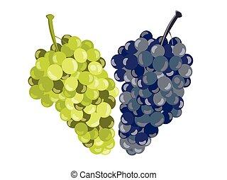 isolated., realistyczny, wektor, winogrona