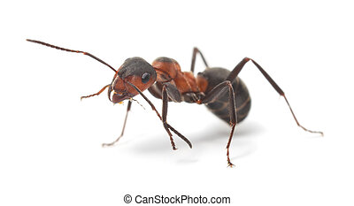 Image result for ant stock photos