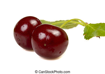 isolated red cherries with leaves