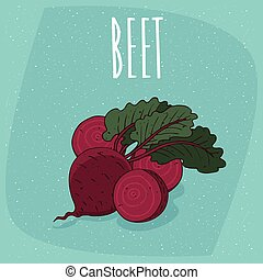 Isolated ripe beetroot fruits or beet