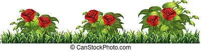 Isolated rose plant for decore illustration