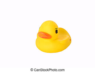 rubber duck - isolated rubber duck