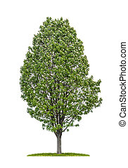 isolated service tree on a white background