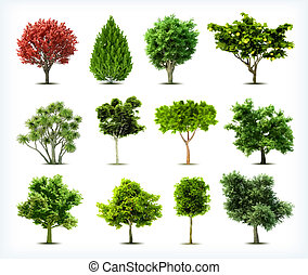 isolated., set, bomen, vector