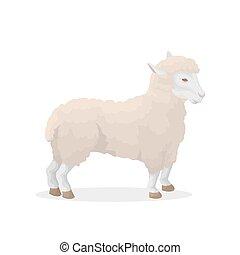 Isolated sheep illustration.