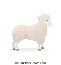 Isolated sheep illustration.
