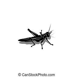 Isolated silhouette of a grasshopper with a shadow, an insect is preparing to jump, black and white vector illustration is suitable for the original tattoo.