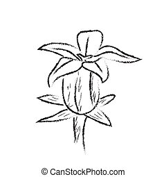 Isolated sketch of a flower on a white background