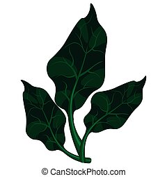 Isolated spinach leaves icon image. Vector illustration...