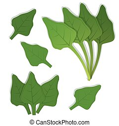 Isolated spinach leaves - Spinach leaves bunch. White...