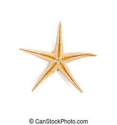 Isolated starfish on white background. Top view