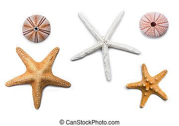 Isolated Starfish - Three nice isolated starfish and two sea...