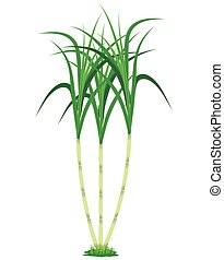 isolated sugar cane plant on white background vector design
