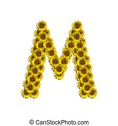 Isolated sunflower alphabet M