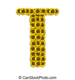 Isolated sunflower alphabet T