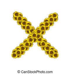 Isolated sunflower alphabet X
