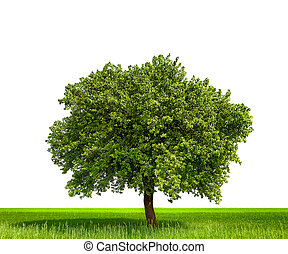 Isolated tree against a white background