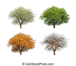 season - isolated tree in for season