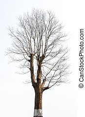 isolated tree in the winter