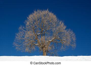 Isolated tree in winter season