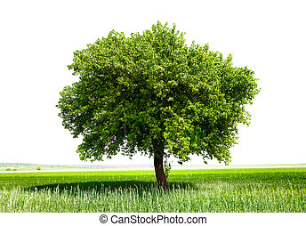 Isolated tree on green meadow