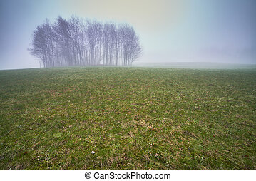 Isolated trees in a meadow