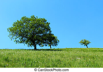Isolated trees on a mountain slope against blue sky