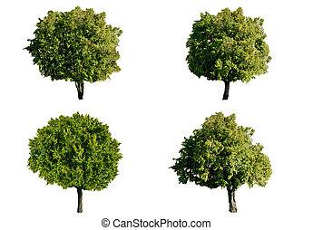 Isolated trees on white background