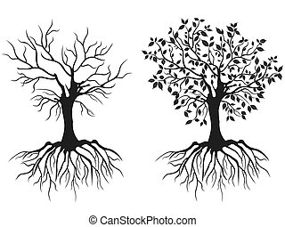 trees with roots - isolated trees with roots in spring and...