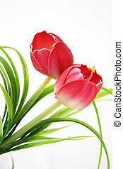 Isolated tulips