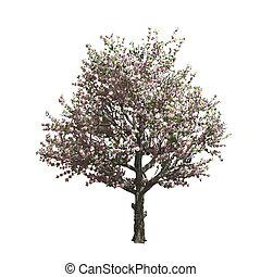 isolated., vecteur, arbre, pomme, illustration
