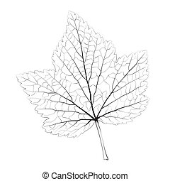 Isolated vector monochrome currant