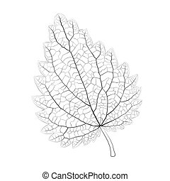 Isolated vector monochrome nettle leaf.
