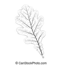 Isolated vector monochrome oak leaf.