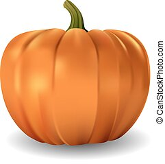 Isolated vector realistic pumpkin on white background.