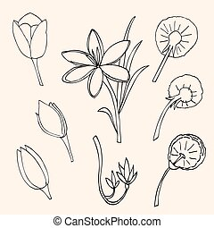 isolated., vector, set, bloem, illustratie