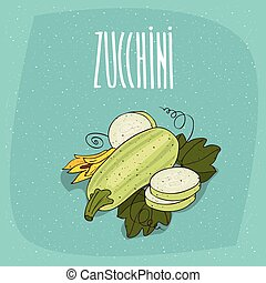 Isolated vegetable fruits courgette or zucchini - Ripe...