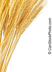 Isolated wheat ears