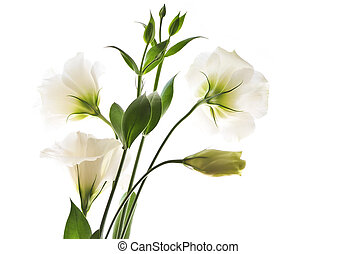 Isolated white flowers