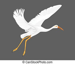 isolated white heron on grey background