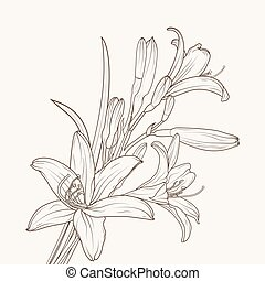Isolated white lily flower