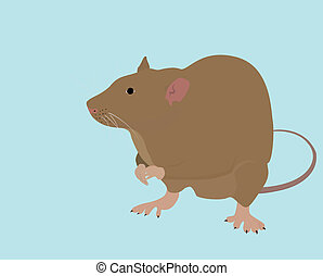isolated wild brown rat or mouse on blue background