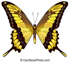 Isolated Yellow Butterfly Vector Illustration