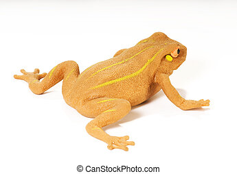 frog - isolated yellow frog with striped on white background