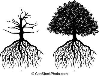 isolato, albero, con, radici